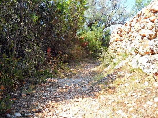 Myrto Vacation Relaxing Homes: The hand made path down to the main road from the apartments