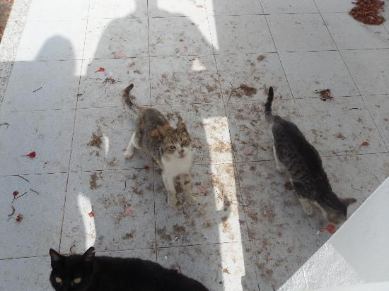 Club Green Oasis Loma Verde: Stray cats filthy apartments floors