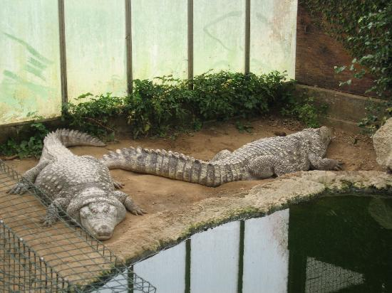 Thrigby Hall Wildlife Gardens: The crocs are watching!!