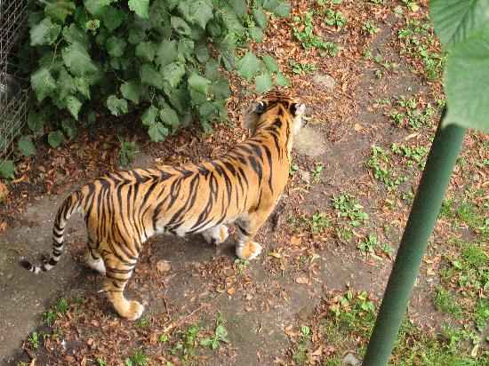 Thrigby Hall Wildlife Gardens: Magnificent animal
