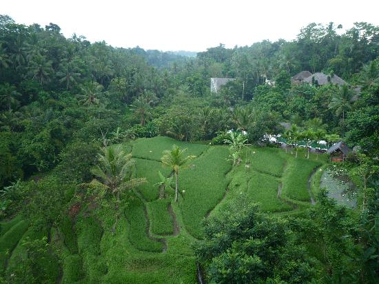 Komaneka at Bisma : From our Suite balcony