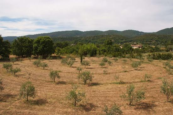 Le Pavillon de Galon : La spirale d'oliviers
