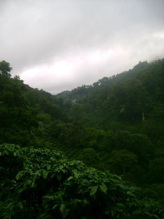 Jinotega, Nikaragua: Mist forming above the hillsides, planted with coffee below old-growth trees