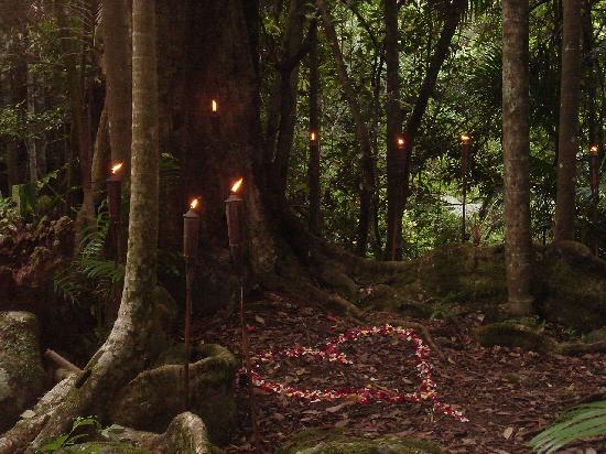Crystal Creek Rainforest Retreat: Over 8 KMs of rainforest walks on the property