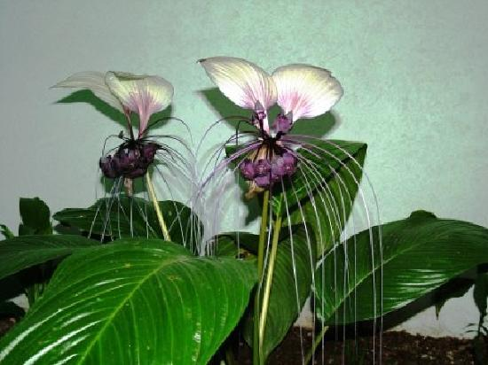 Citysider Holiday Apartments: Citysider Cairns - Rare White Bat