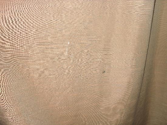 Palms Island Resort & Marina : paint splotches on curtains