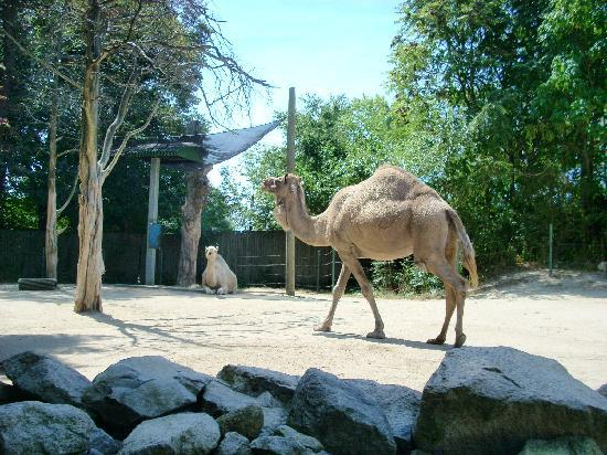 Roger Williams Park Zoo: Camels looked healthy and happy.