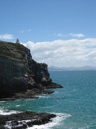 Dunedin Albatros Kolonie
