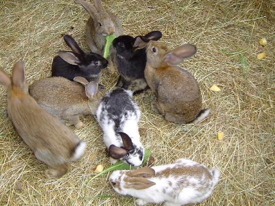 Waldhotel Bächlein: Es gibt in der Nähe des Hoteleingangs viele niedliche Kaninchen.