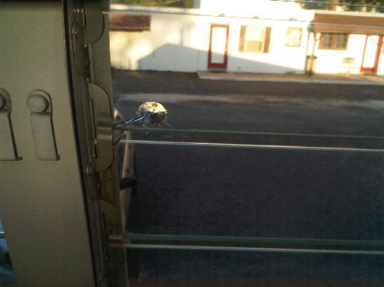 Alamo Motel 사진