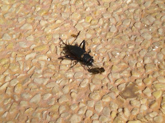 Hotel Clumba: scarafaggi morti nell'hotel sostitutivo