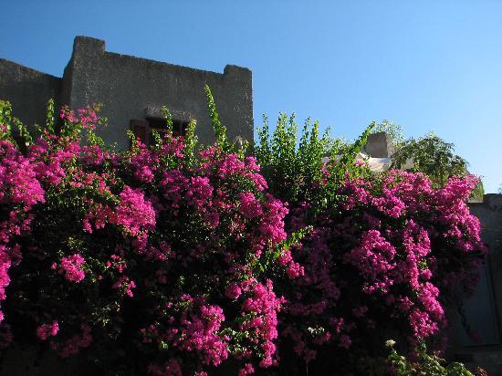 Gythio, Griechenland: Überall wächst und blüht es..