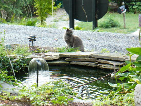 Aberdeen Inn: Michele has tons of little water features that the neighborhood cats visit.