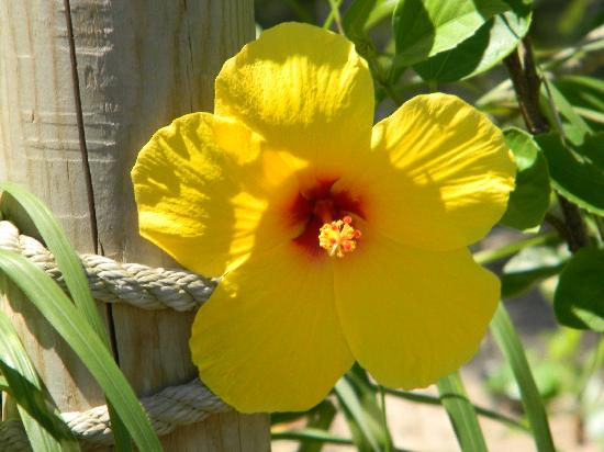 Sedgwick County Zoo: Beautiful exotic plants throughout the zoo.