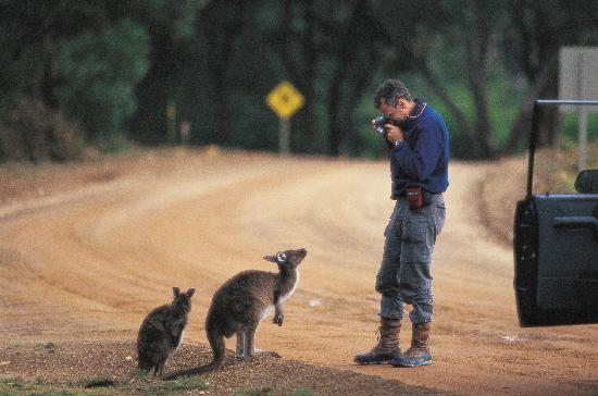 Wyspa Kangura, Australia: Flinders Chase National Park, Kangaroo Island
