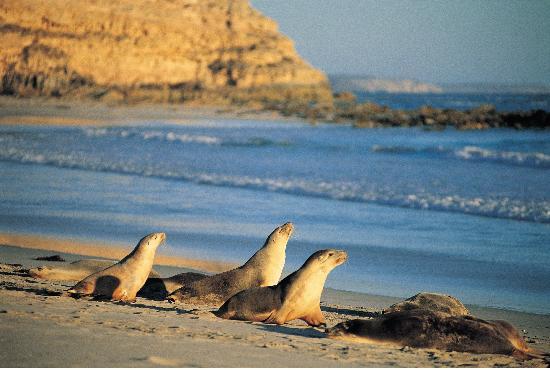 Isla Canguro, Australia: Seal Bay, Kangaroo Island