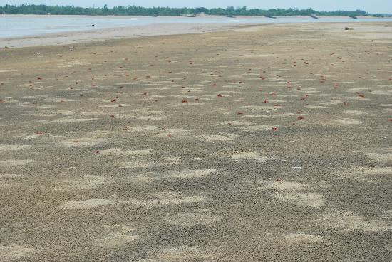 The Sana Beach Resort: Red Crabs on the Beach