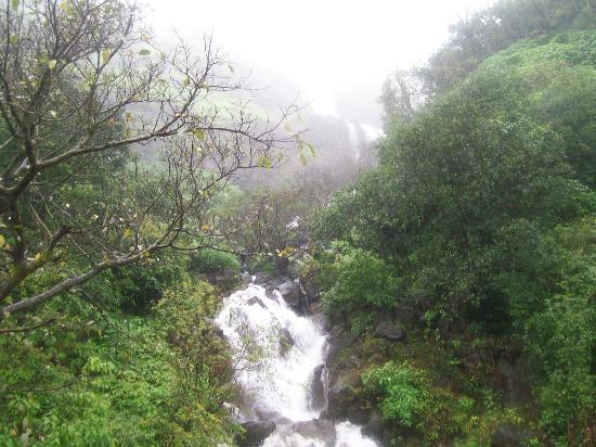 MTDC Holiday Resort Mahabaleshwar: Rainy season in Mahabaleshwar