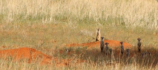 Suricate Kalahari Tented Lodge: a beautiful vieuw