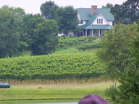 Dobson, NC: Shelton Vineyards - Owner's home and some of the vines