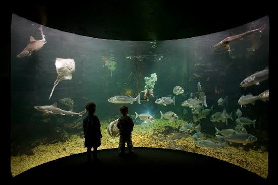 Anglesey Sea Zoo Sw Mor Mon: The Big Fish Forest and Diver