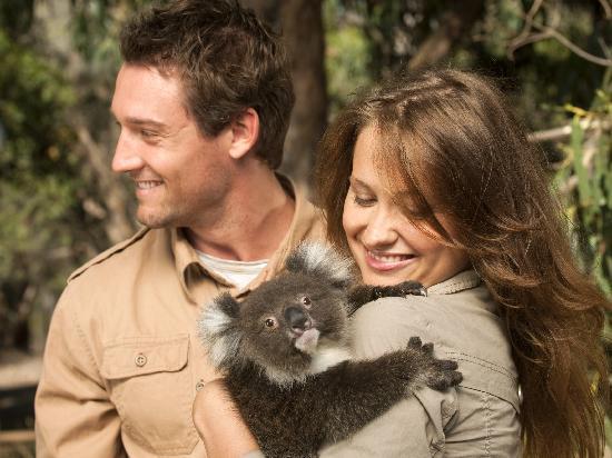 Cuddling a Koala, Cleland Wildlife Park, Adelaide Hills