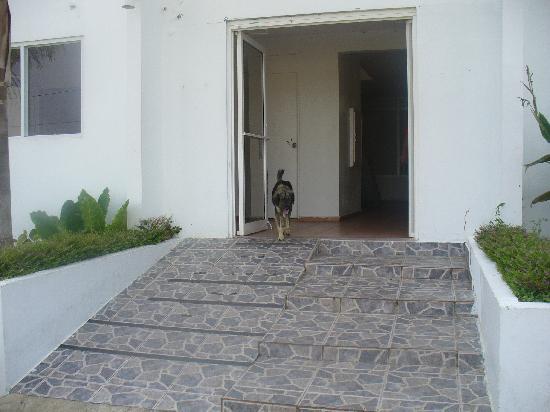 Buenas Olas Hotel: dogs