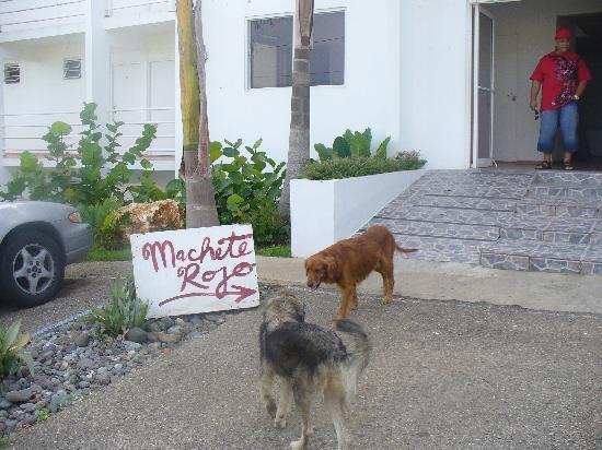 Buenas Olas Hotel: more dogs