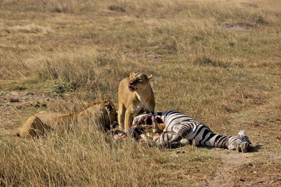 تنزانيا: Tanzania Safari