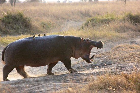 Танзания: Tanzania Safari