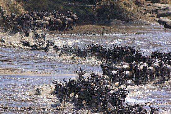 Tansania: Tanzania Safari