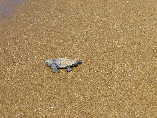 Gerakas Bay: caretta-caretta tourtle