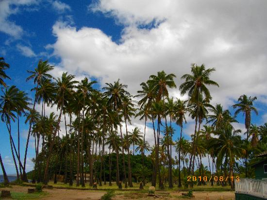 Kapuaiwa Coconut Grove / Kiowea Park: ココナッツグローブ