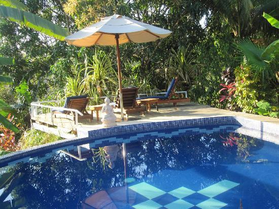 Nature Lodge Finca los Caballos: pool and common terrace