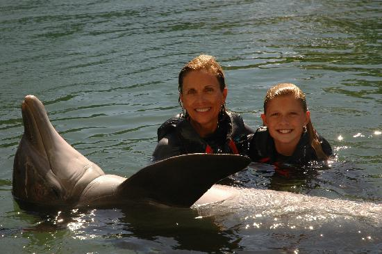 Dolphin Quest : In the water with one of 'the boys'