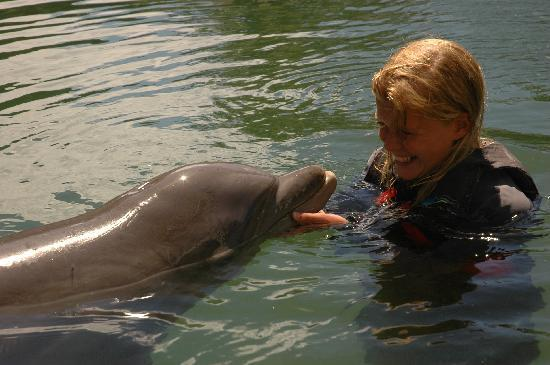 Dolphin Quest : Samantha and Friend