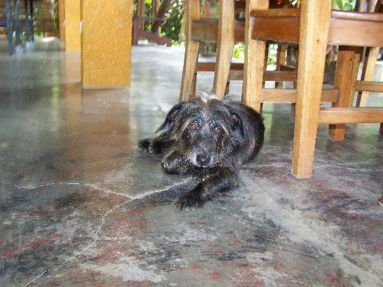 Pearl of the Osa: If you'd like a companion for lunch Spike will usually endulge. :)