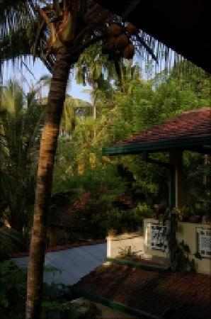 Palm Grove: View from terrace