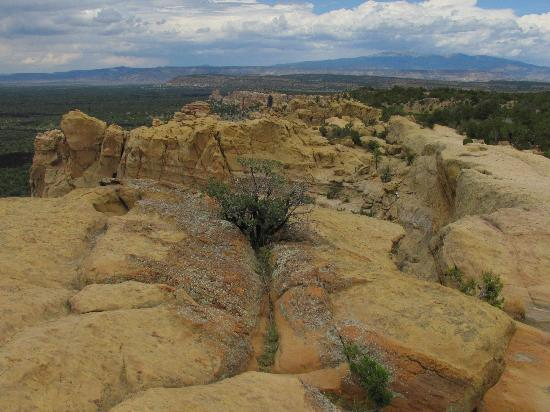 El Malpais National Monument: On top of the mesa