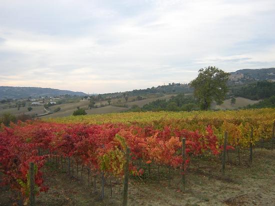 Residenza del Marchese: colori d'autunno