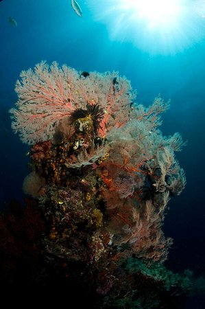 Raja Ampat, Indonesien: Best Diving