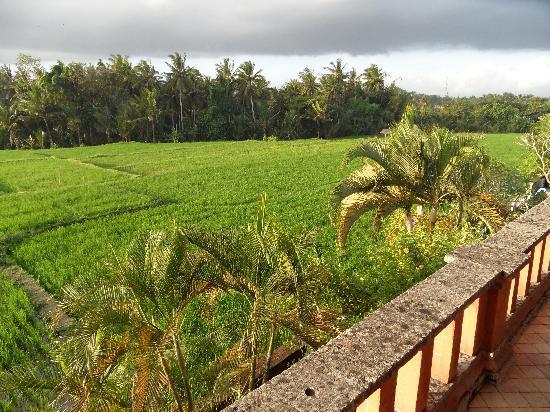 Mandala Desa: Vue sur les rizières
