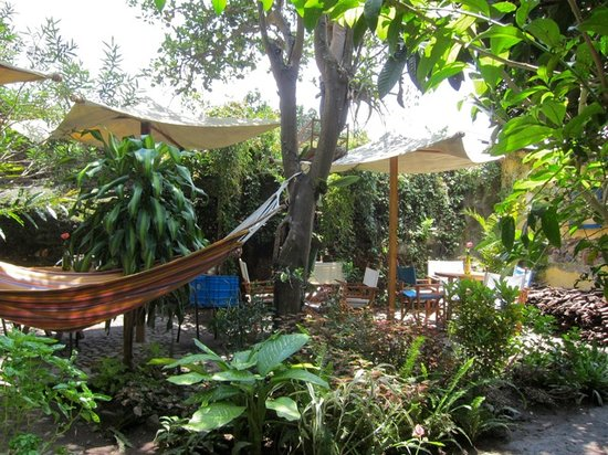 Saberico: garden in back
