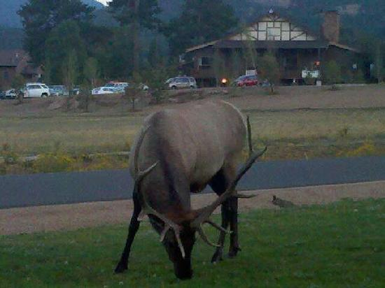 YMCA of the Rockies: Local visitor. We're about 6 feet away.