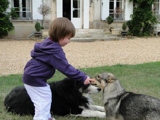 Chateau de la Puisaye : dogs