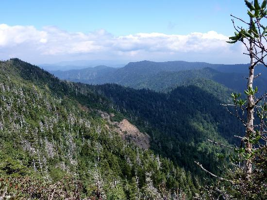 LeConte Lodge: view from the lodge