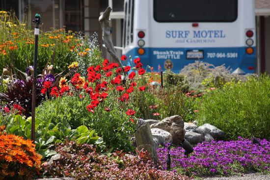 Surf Motel and Gardens: Shuttle bus