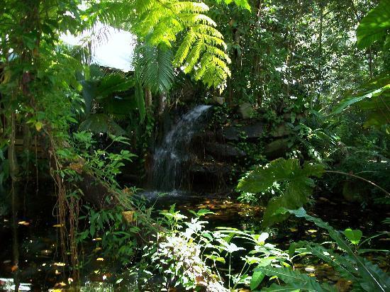 Daintree EcoLodge & Spa: waterfall next to restaurant