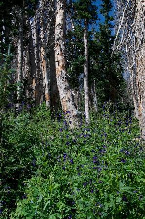 Cedar Breaks National Monument: Cedar Breaks - Meadow