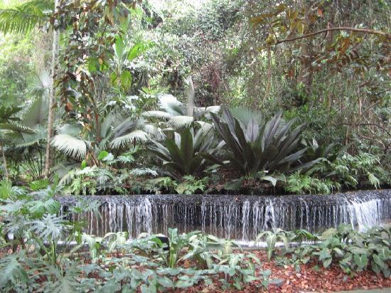 Bonsai photo de jardin botanique de singapour singapour for Jardin botanique singapour